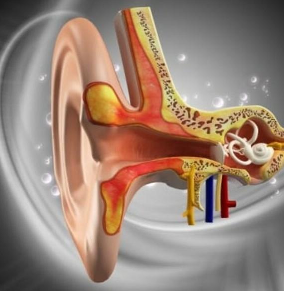 Vestibular Pic